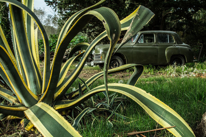 EyeEmNewHere Field Plant Abandoned Allgreen Day Grass Green Color Nature No People Oldcar Outdoors Transportation