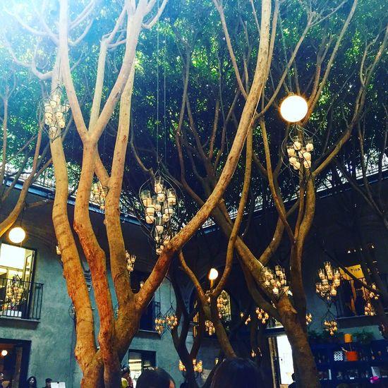 AzulHistóricoRestaurante Trees Mexico City Cdmx Light