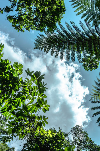 Beauty In Nature Branch Cloud - Sky Day Growth Jungle Leaf Leaves Love Low Angle View Mexico Nature Nature Nature Photography No People Outdoors San Luis Potosí Scenics Sky Sky And Clouds Tranquility Tree Trees Treetop Xilitla