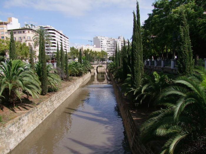 River by Passieg Mallorca, Palma Blue Sky White Clouds Composition Mallorca Palma Palma De Mallorca Plants SPAIN Sunlight And Shade Trees Bridge Buildings Cedar Trees City Full Frame Garden Growth Nature No People Outdoor Photography Palm Trees Reflection Of The Bridge Reflections In The Water River Stream Water