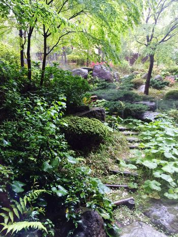 Beautiful Japaneses Garden Hakone Japan
