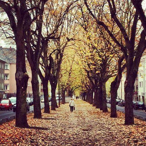 #rheydt #brucknerallee #mg #nrw #igersnrw #autmn #herbst #trees #aller #nature #natur #yellow #brown #street #streetside #germany #golden NRW Yellow Brown Golden Autmn MG  Igersnrw Rheydt Streetside Street Nature Natur Brucknerallee Trees Aller Germany Herbst