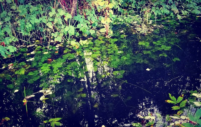 Ditch Ditch Water Aquatic Plants Forest Backgrounds Green Color Nature Reflection No People Water Plant Beauty In Nature
