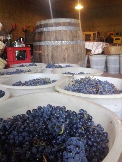 Grapes 🍇 Grapes On The Vine Grapes Vendemmia