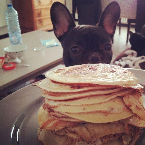 Je peut avoir une ptite crêpe??? Petitdej DimancheMatin Bouledoguefrancais Frenchbulldog crepe partycrêpe gourmandise