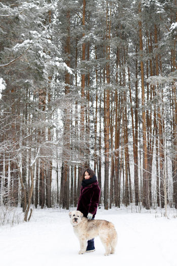 Beautiful woman is walking with her south russian shepherd dog on a background of winter forest.