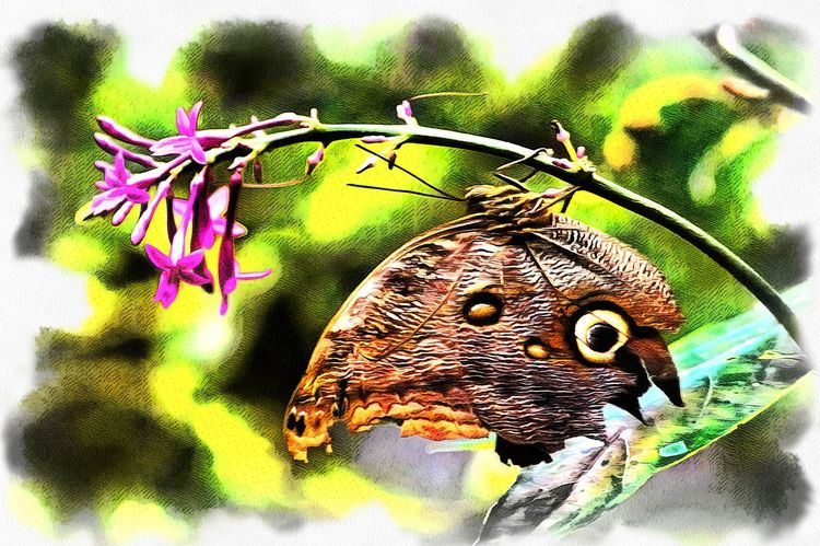 Animal Themes Animal Wildlife Animals In The Wild Beauty In Nature Butterfly - Insect Close-up Day Digital Art Flower Focus On Foreground Fragility Freshness Insect Nature No People One Animal Outdoors Perching Photo Manipulation Pollination Wildlife