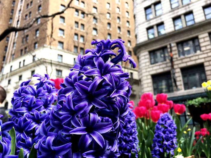 Beauty In Chaos Lunch Break Escape Park Time Little Heaven Oasis Flowers Flowering Plant Flower Purple Plant Freshness Vulnerability  Petal Building Exterior Growth Nature Inflorescence Day Beauty In Nature Close-up Flower Head City Focus On Foreground Architecture Visual Creativity EyeEmNewHere The Street Photographer - 2018 EyeEm Awards The Great Outdoors - 2018 EyeEm Awards Summer In The City My Best Travel Photo EyeEmNewHere