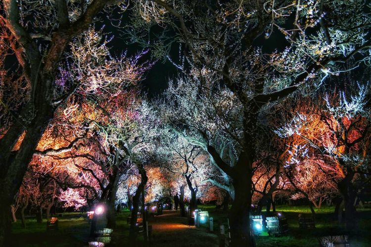 Low angle view of trees in park at night