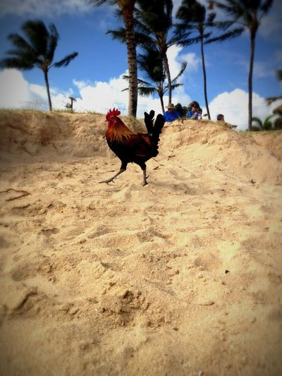What Does Freedom Mean To You? Why Did The Chicken Cross The Beach?