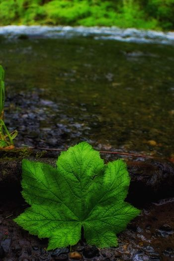 Green Color Leaf Nature Water Outdoors Day No People Close-up Plant Growth Freshness Beauty In Nature Fragility