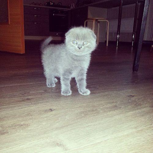 Cat котэ котёнок Симба