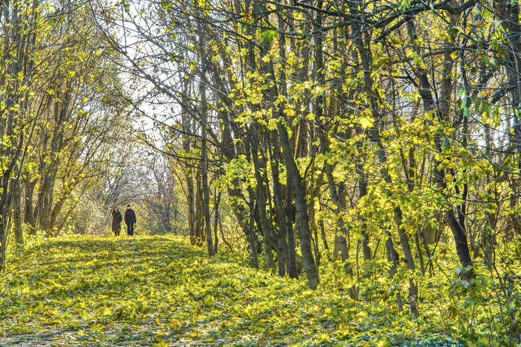 2 Persons Atumn Leaves Autumn Light Autumn Walk Beauty In Nature Forest Green And Yellow Leaves Grüne Und Gelbe Blätter Herbstlicht Herbstspaziergang Leaves On The Ground Light Atmosphere Outdoors Sunny Day
