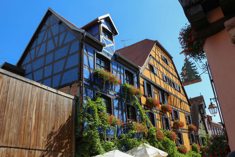 Alsace buildings Alsace Apartment Architecture Blue Building Building Exterior Built Structure City Clear Sky Day Growth House Low Angle View Nature No People Outdoors Plant Residential District Row House Sky Sunlight Tree Window