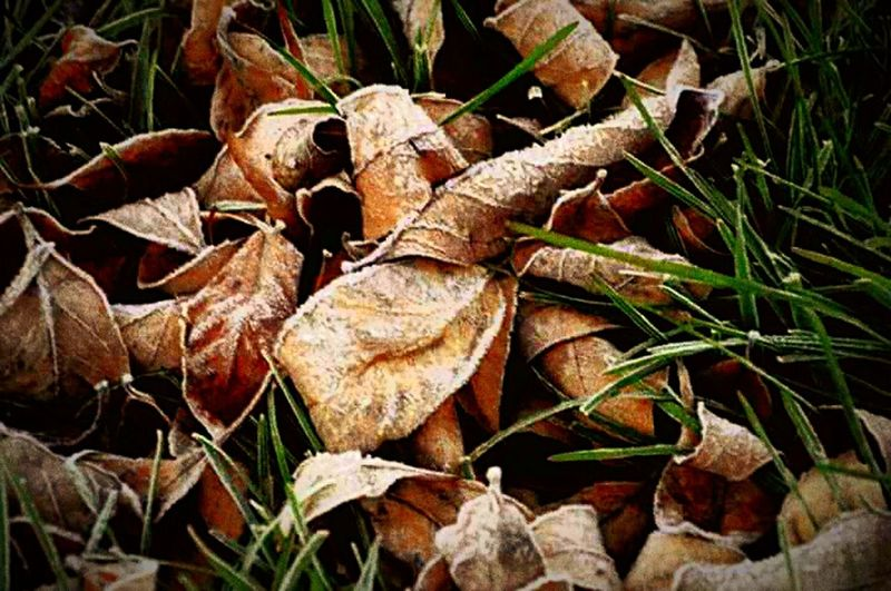 No People Close-up Nature Simple Life EyeEmNewHere Nature Outdoors Leafs On The Ground Leaf 🍂