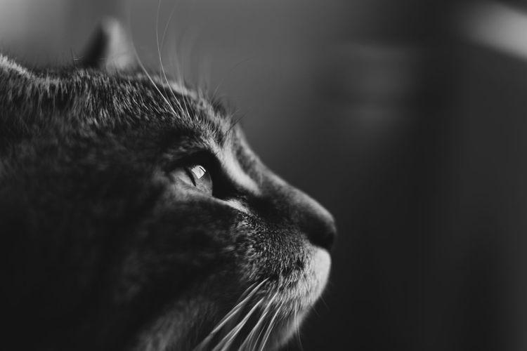 Cat view through the window