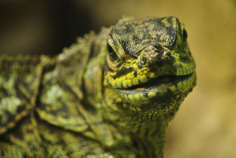 Animali Bioparco Natura Nikon