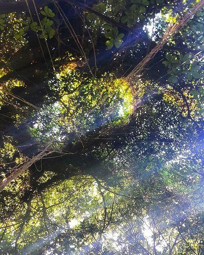 Teto verde formado no meio da trilha de ontem! Lookupclub Lookup Green Trees Hooftop Parquedacatacumba Catacumba Trilhaleve Trilhando Trilha RJ