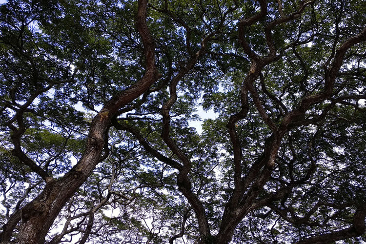 Tree Plant Low Angle View No People Tree Trunk Trunk Day Nature Branch Sky Beauty In Nature Growth Tranquility Outdoors Full Frame Backgrounds Tree Canopy  Plant Part Forest Leaf