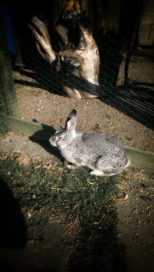 Rabbit Outdoors Tavşan