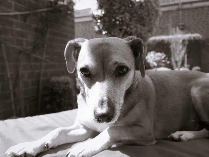 My sisters dog checks me and my cam... Taking Photos Relaxing Portrait Pet Photography  Monochrome Portrait Photography Blackandwhite Photography The Portraitist - 2016 EyeEm Awards The Essence Of Summer- 2016 EyeEm Awards Pet Portraits