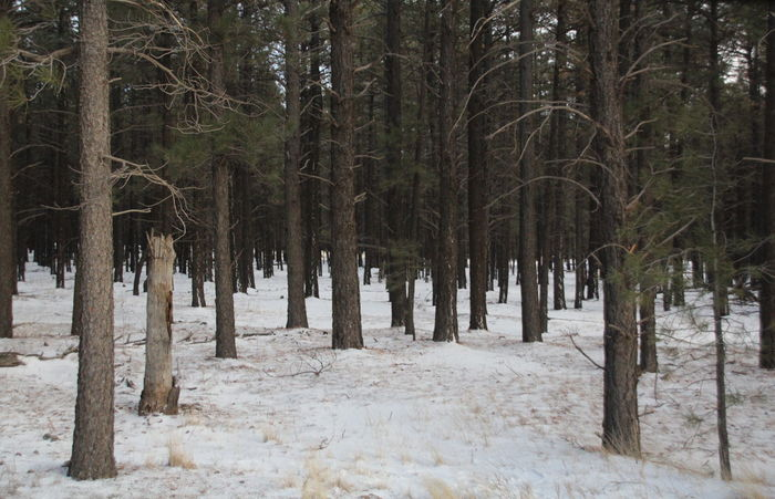 Christmas Cold Flagstaff Forest Outdoors Snow Snow ❄ White Christmas White Christmas❄⛄ Winter