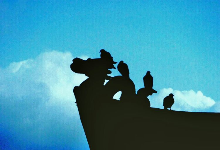 Birds Silhouette Dragon Four Birds Sky And Clouds Blue Sky Bird Photography Silhouette_collection Silhouette_creative Silhouette And Sky Eye4photography  Architecture Travel Photography Getting Inspired Getting Creative From My Point Of View EyeEm Best Pics EyeEm Best Shots Fine Art Photography EyeEm Gallery Nature On Your Doorstep Shadows Silhouettes Of Sunset Birds Of EyeEm  Birds_collection