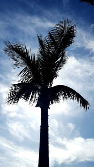 The Palm Palm Tree Blue Sky Sun Hiding Palmislands
