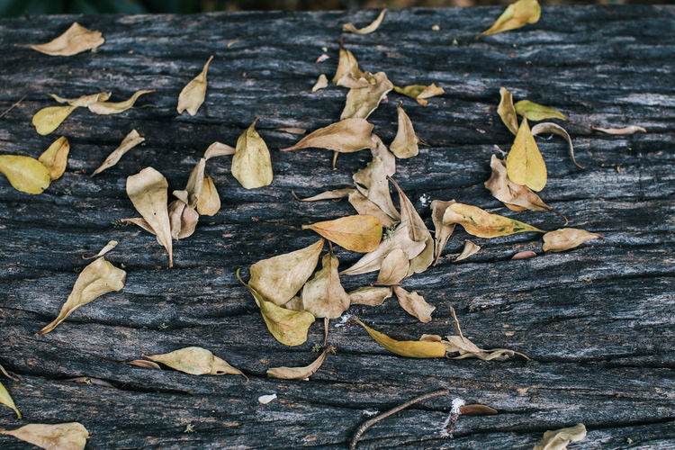 High angle view of dried leaves on wood