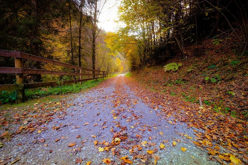 Enjoyable Autumn Walk Partner Collection EyeEm Partner Selection Eyeem Sales Tree Plant Nature No People Day Growth Direction The Way Forward Outdoors Beauty In Nature Sunlight Falling Plant Part Tranquility Road Capture Tomorrow Capture Tomorrow