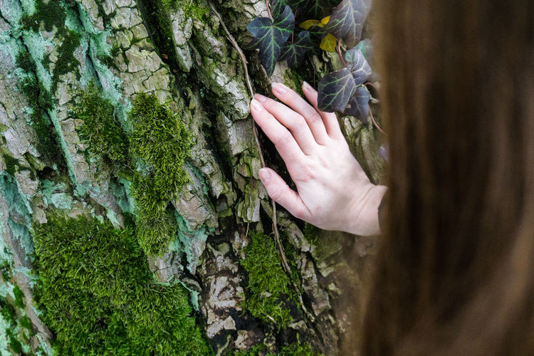Cropped hand of woman touching tree trunk in forest