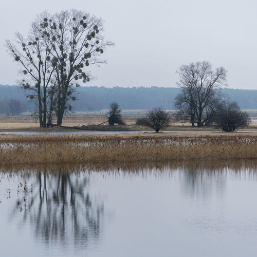 Landscape in the area of Oderbruch, Germany. Bare Tree Beauty In Nature Day Lake Landscape Lone Nature No People Outdoors Reflection Scenics Sky Tranquil Scene Tranquility Tree Water