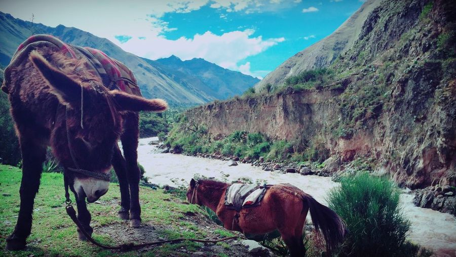 Donkey And Horse By River Against Mountains On Sunny Day