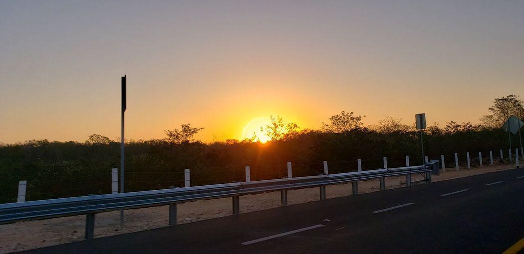 The Mobile Photographer - 2019 EyeEm Awards Tree City Sunset Ice Hockey Soccer Hockey Sun Sunlight Dawn Road