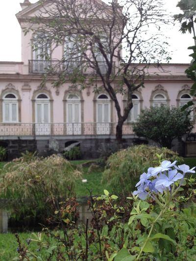 Urban Nature Flowers,Plants & Garden EyeEm Nature Lover