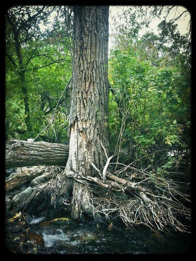 TreePorn Wintage Filter