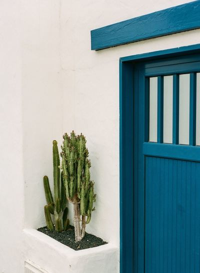 Cactus plants by door