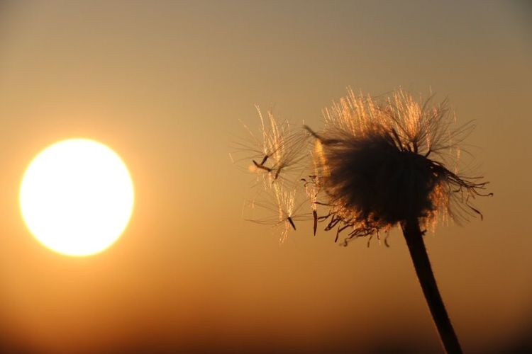 Dandelions EyeEm Nature Lover Nature_collection Nature Sun_collection