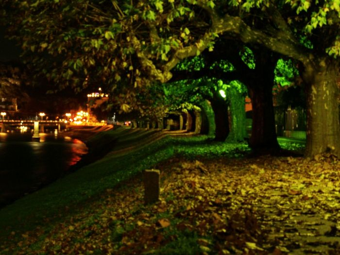Long Exposure Salzburg Oldtown Nightphotography Autumn Leaves Night City City Lights Colorful Trees Walkway Cities At Night
