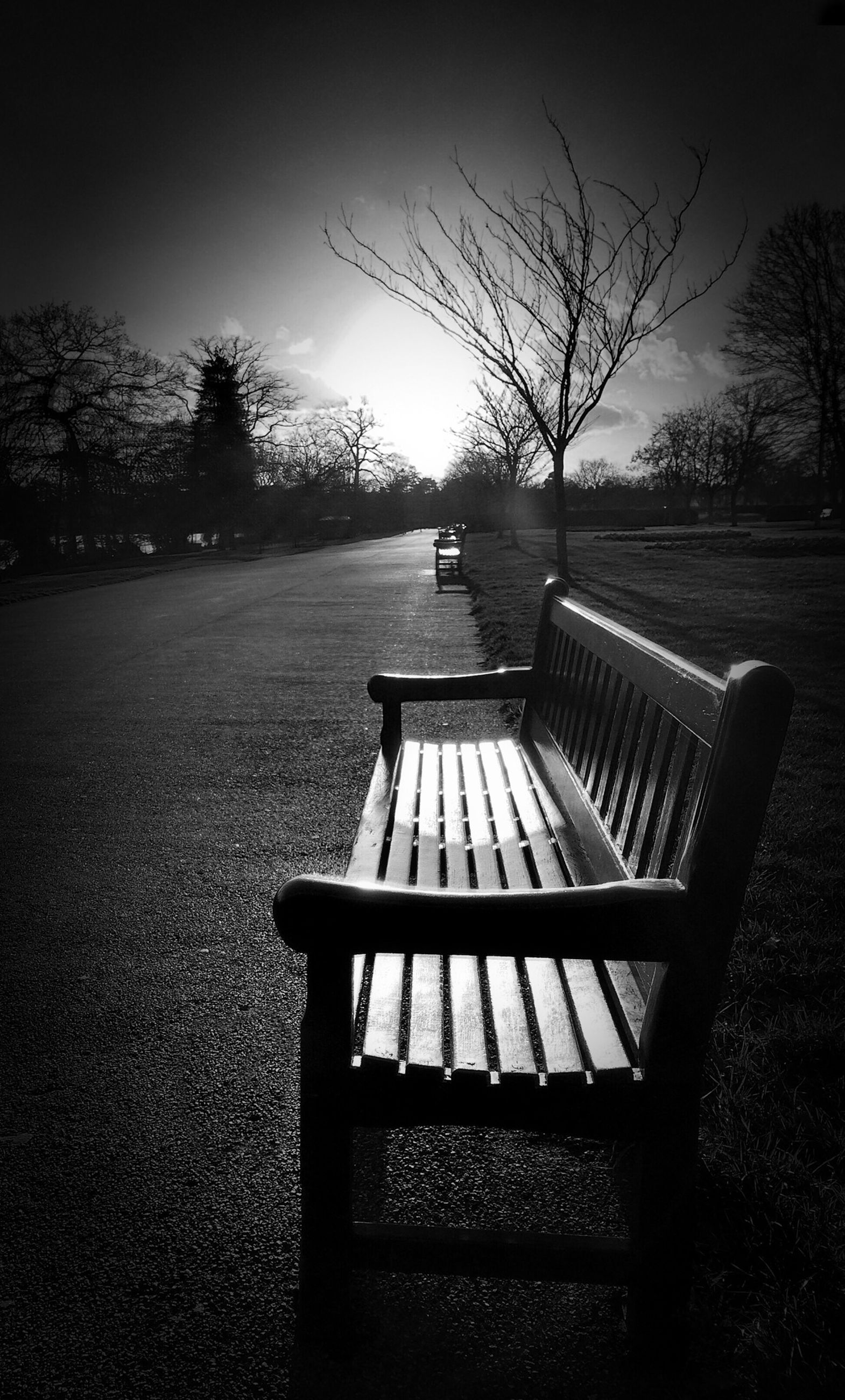 bench, tree, empty, tranquility, tranquil scene, absence, park bench, sunlight, nature, scenics, chair, park - man made space, clear sky, seat, wood - material, shadow, bare tree, landscape, beauty in nature, grass