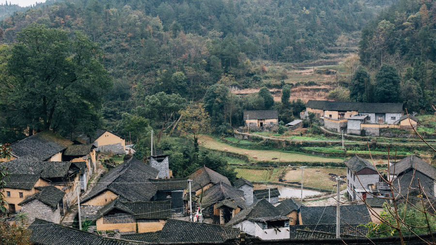 High angle view of houses and trees in village