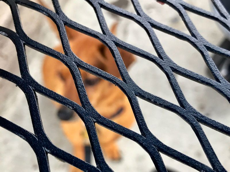 Always Read Between The Lines. Metal Backgrounds Safety Full Frame Chainlink Fence Protection Security Close-up No People Pattern Textured  Crisscross Day Outdoors Dog Day Relaxing