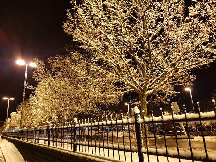 Snowy Trees Arbre Neige Nocturne Neige Snow Covered Fence Cold