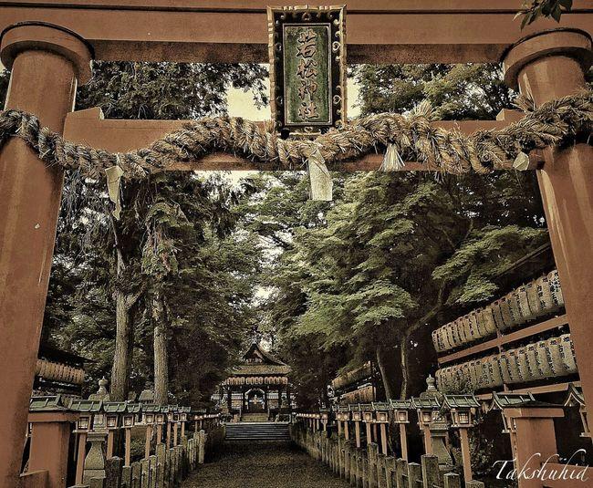Architecture Garden TreePorn Shrine