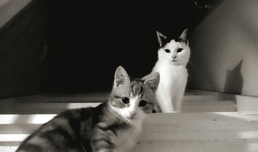 Together Friends Friendship Onthestairs Lookingup Waiting Catsphotography Catlovers Cats Of EyeEm Blackandwhite Black & White Light And Shadow The Typical Eveningpose