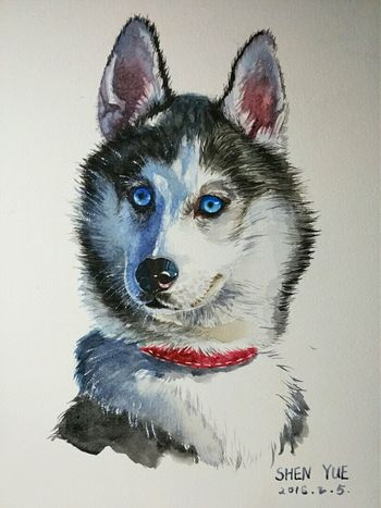 Watercolor Drawing Dog Looksgood Lovely