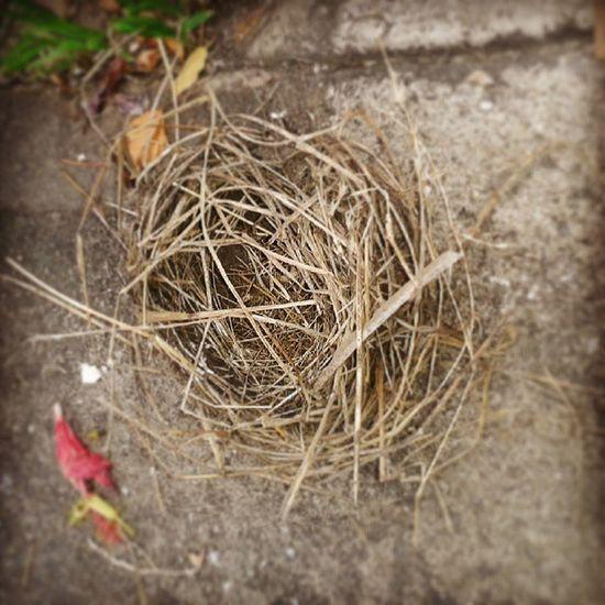 Un nidito que me consegui en el camino...Observando Picofday Instapic Instalike maracay instamoment InstaVerde instagood instacool