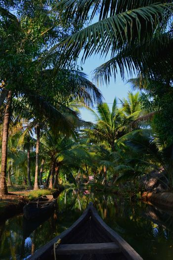 Green India Beauty In Nature Boat Day Jungle Kerala Nature Outdoors Palm Tree Plant River Tree Tropical