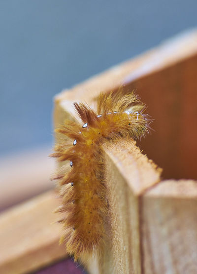 Close-up of caterpillar on cactus