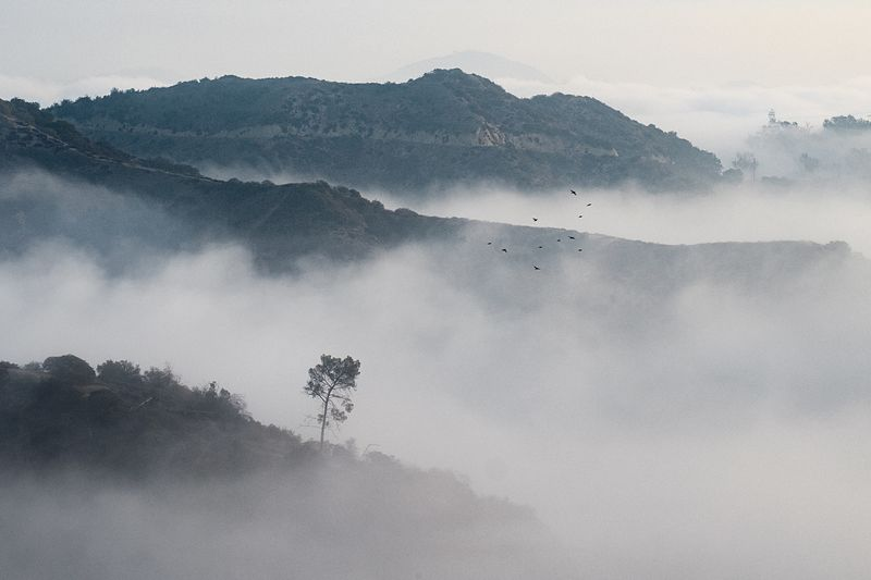Who wants to remain in the fog when you can rise above it? Scenics - Nature Land Environment Mountain Beauty In Nature Landscape Tranquil Scene Nature Tree Sky No People Day Tranquility Non-urban Scene Mountain Range Plant Flying Outdoors Idyllic